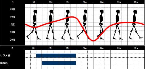 ヒラメ筋の歩行時の筋活動
