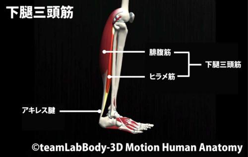 下腿三頭筋2