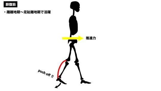 歩行の筋活動|腓腹筋|push-off|