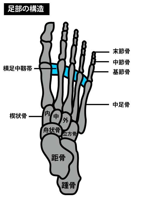 足部の構造|正常