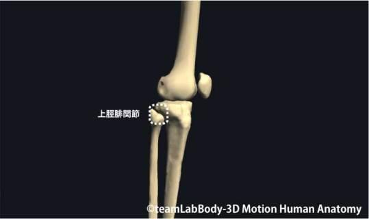 上脛腓関節