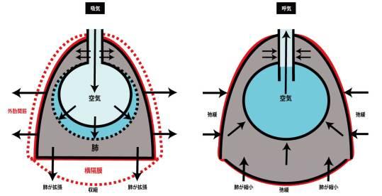 呼吸器の基礎