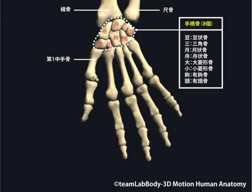 手根骨手掌|各部位の名称