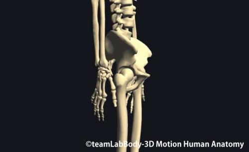 股関節側面