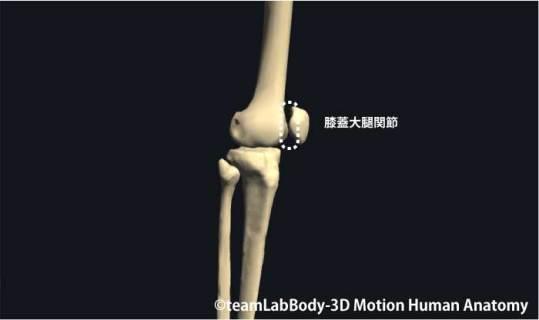 膝蓋大腿関節