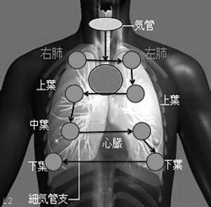 胸部診察の方法