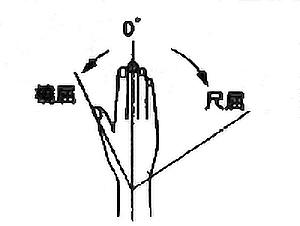 手関節尺屈・撓屈の関節可動域(正常値)