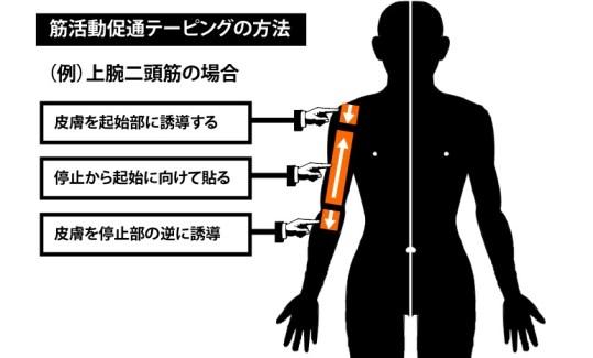 筋活動促通テーピングの方法|上腕二頭筋