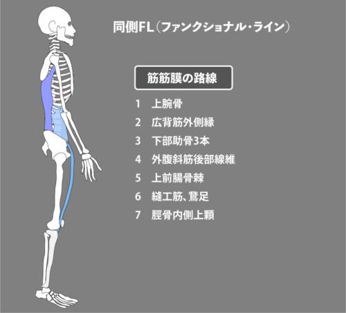 アナトミートレイン:筋膜:同側FL