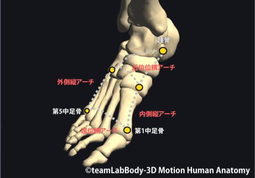 足関節のアーチ
