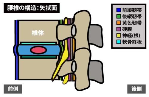 腰椎の構造|矢状面