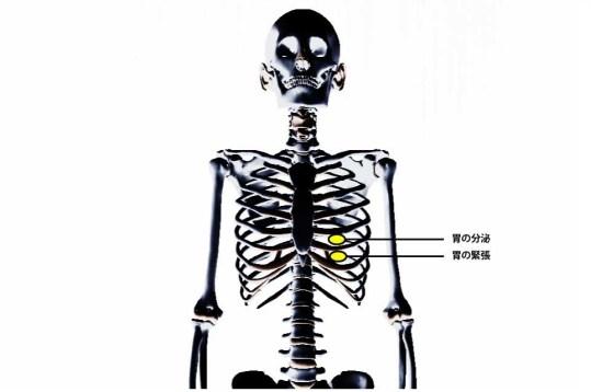 チャップマンの反射点治療|内蔵マニピュレーション|胃
