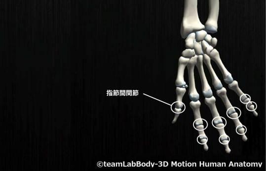 指節間関節