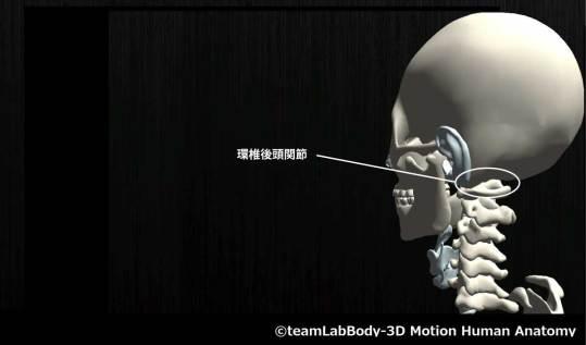 環椎後頭関節
