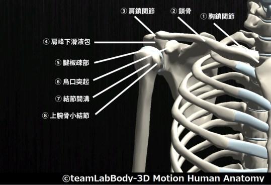 肩関節前面|触診部位