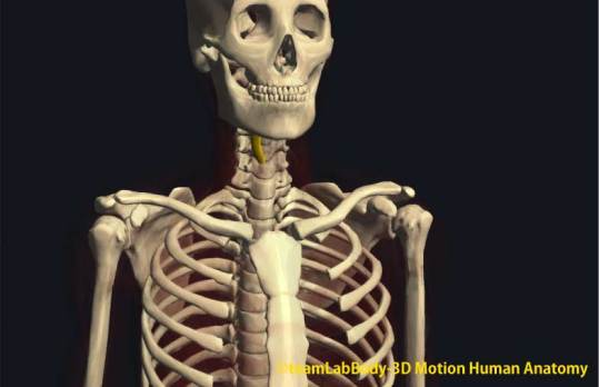 甲状舌骨筋