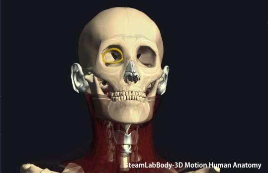 眼輪筋涙嚢部