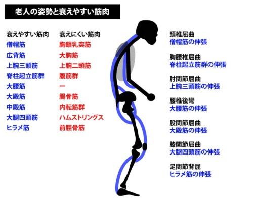 加齢で衰えやすい筋肉と老人姿勢