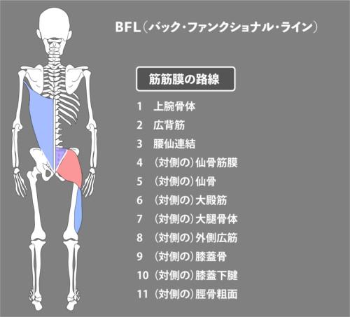 大殿筋:筋膜:BFL