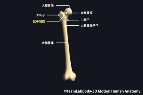 大腿骨転子部の各名称