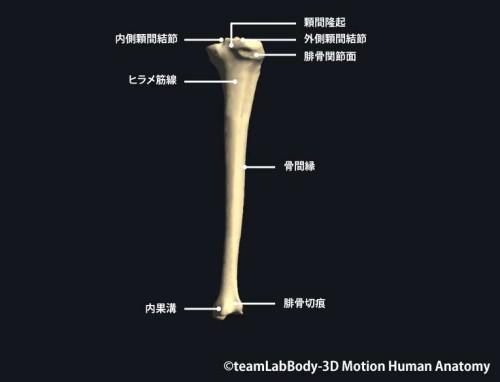 脛骨後面|各部位の名称