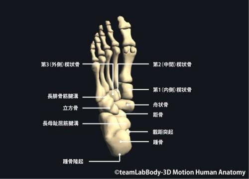 足根骨下面|各部位の名称