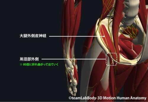 大腿外側皮神経