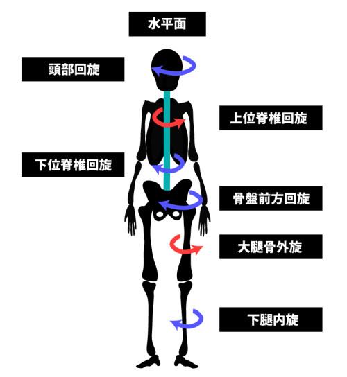 姿勢分析と運動連鎖|水平面