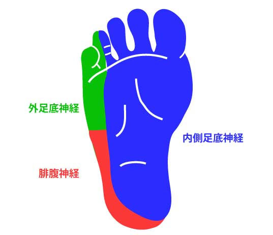 足底の感覚神経|皮膚支配神経