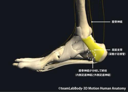 足根管症候群|脛骨神経麻痺