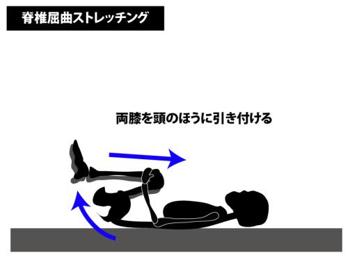 ストレッチ|脊椎屈曲ストレッチング