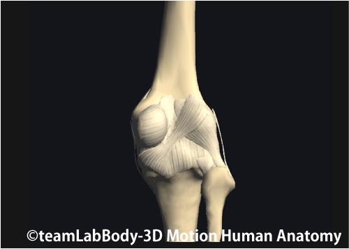 膝関節の裏側