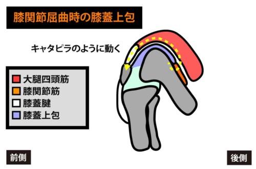 膝関節屈曲と膝蓋上包