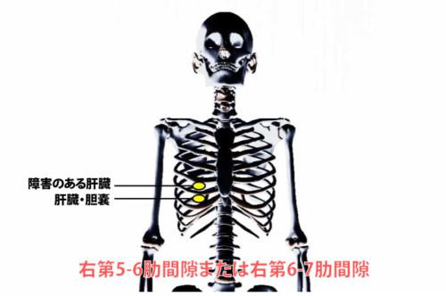 肝臓の圧痛点
