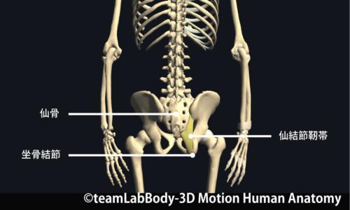 後方筋膜の治療点③