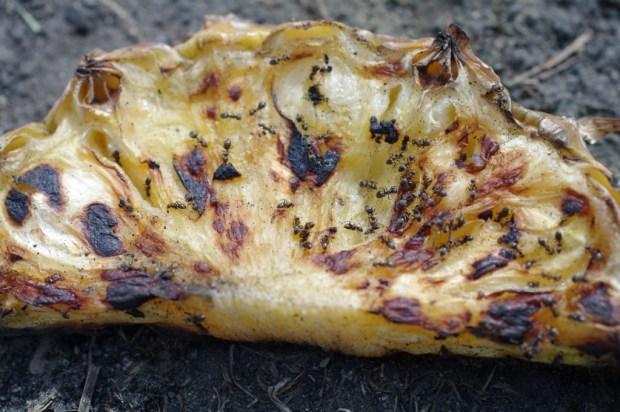 Ameisen auf verbranntem Pfannkuchen