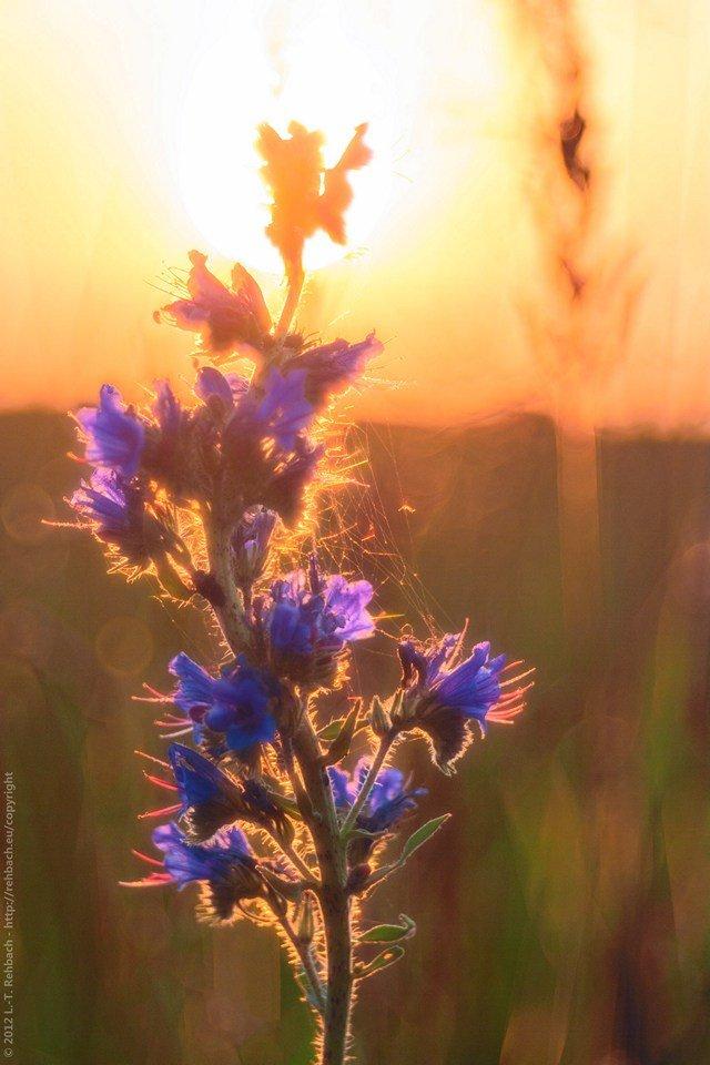 Farbexplosion – aus dem Archiv