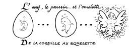 L'oeuf, le poussin... et l'omelette : De la coquille au squelette (dessin)