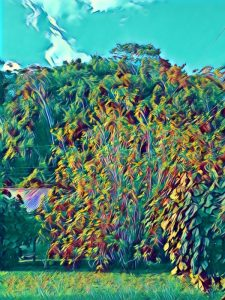 a colorful photo of my front yard with a Prisma filter called servers.com applied