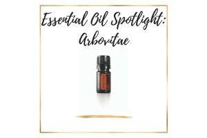Essential Oil Spotlight_ Arbovitae