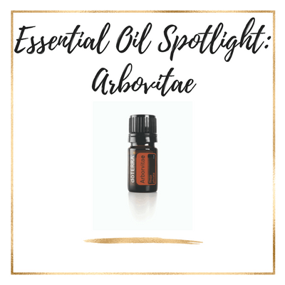 Essential Oil Spotlight: Arbovitae