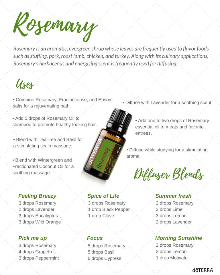 rosemary essential oil infographic