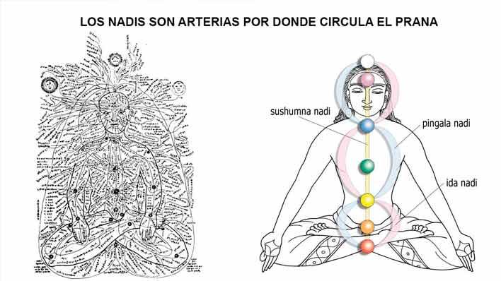 Meridianos, Nadis y Chakras
