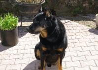 Reiki pour animaux : soin et soutien énergétique