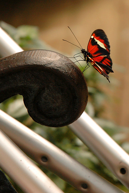 Crutches with a butterfly perched nearby