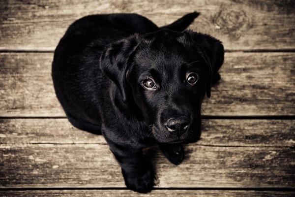 6 maneras de ser un practicante de Reiki de Animales