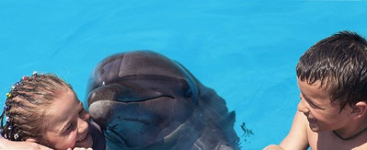 Reiki de Delfines