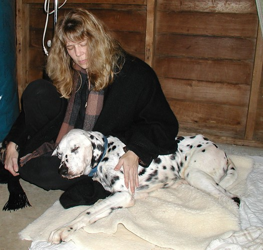 Learn Reiki For People And Animals, May 13-14