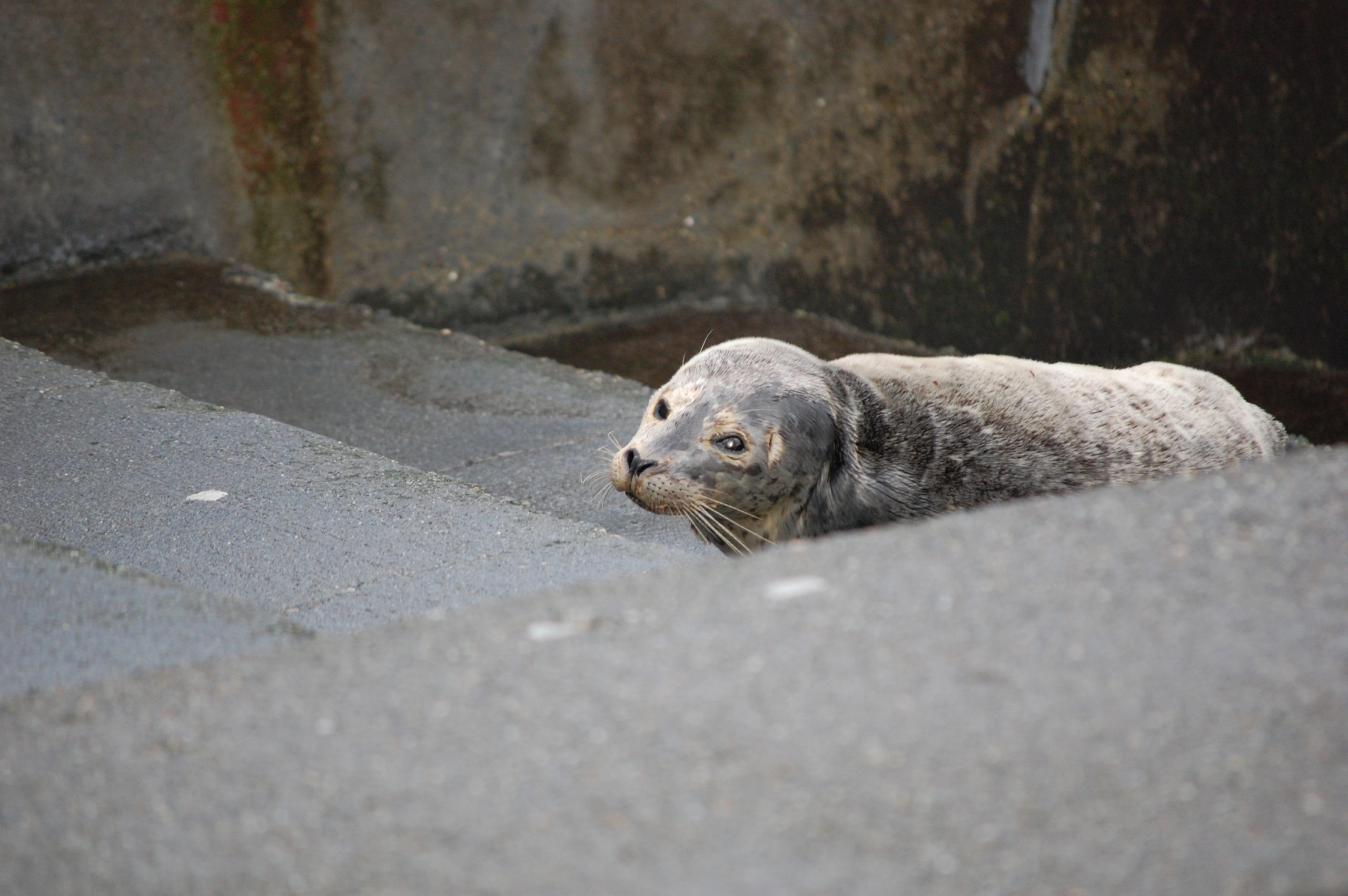 Update For Reiki And The Harbor Seal