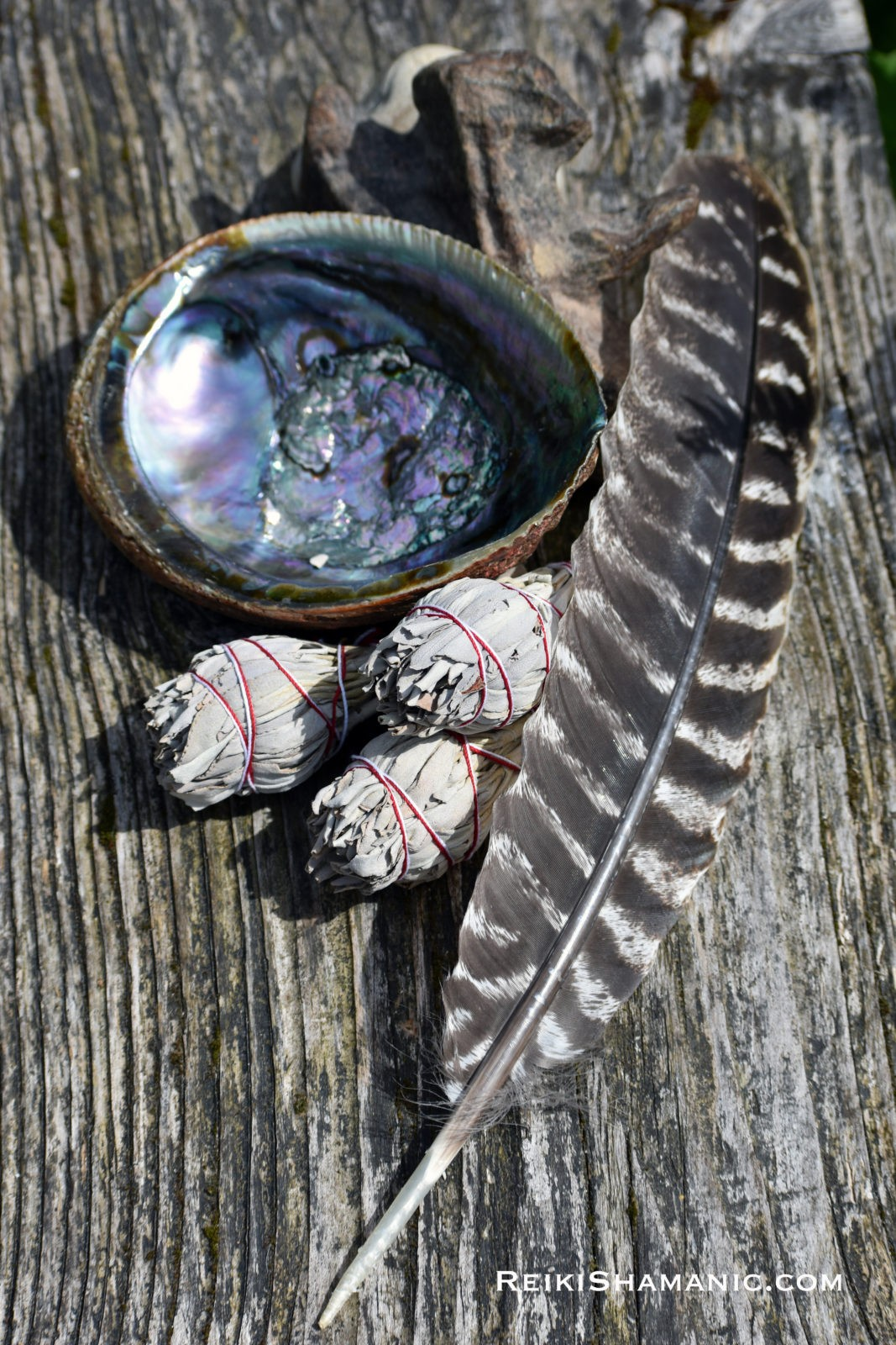 White Sage Smudge Kit With Large Abalone Shell And Feather